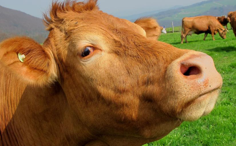 I can be a cranky old cow, and more so when  it comes to badjournalism